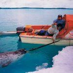 """Om någon frågar """"Hänger du med till norra Grönland"""" så måste man ju svara ja. Fotografen Staffan Widstrand ringde och berättade att han skulle åka till världens nordligaste by, ett ställe norr om militärbasen Thule, för att paddla och fota narvalar. Inuiterna här har okej på att jaga och vi åkte dit till jakt säsongen för att följa den."""